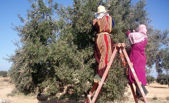 l'olivier en tunisie, mythes et légendes