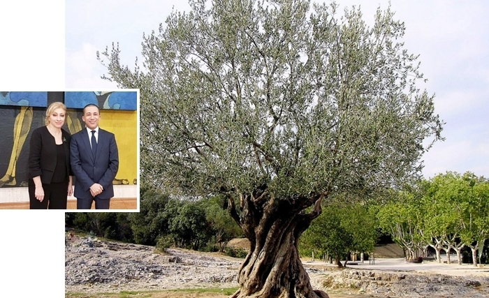 A l'initiative de la Tunisie et du Liban, l'UNESCO instaure la journée mondiale de l'Olivier