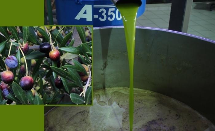 L'huile d'olive, l'or vert de la Tunisie