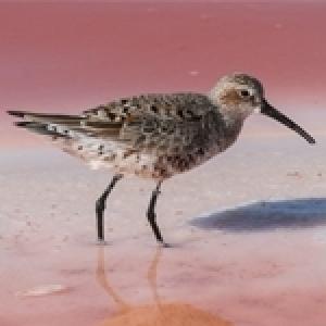 Sel et oiseaux : une exposition inédite à l'Agora, La Marsa