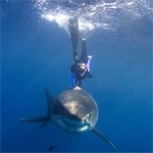 Comment nager au milieu des requins